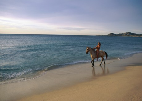 Caballo, Paseo a caballo, paseo a caballo en la playa