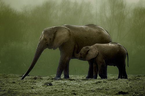 Elefantes en el Parque de Cabárceno