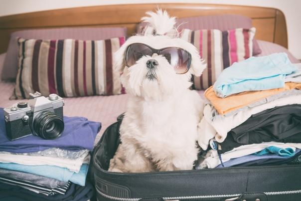Hoteles que admiten mascotas