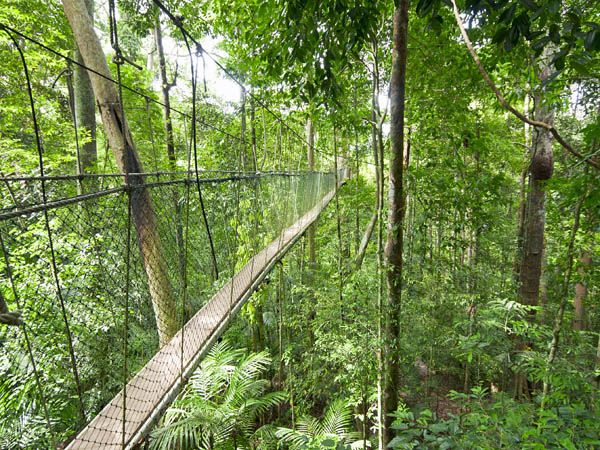 Selva de Teman Nagara