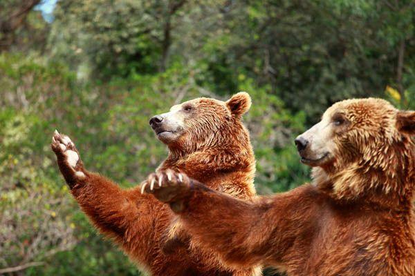 Zoo de Madrid, qué hacer con niños en Madrid