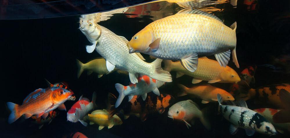 entenda-as-diferencas-entre-peixes-de-agua-doce-e-salgada.jpeg