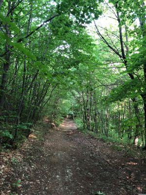 Der Waldbachsteig im umgebenden Wald