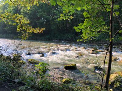 Felsen im Kieferbach, am Ufer grüne Wälder