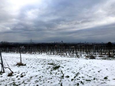 Blick auf Wien über einen Weingarten