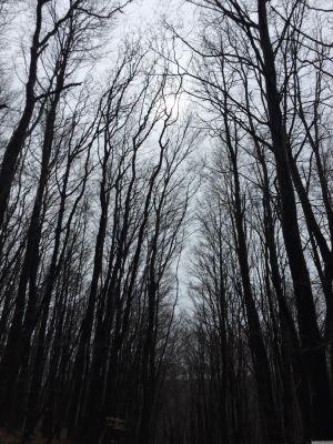 Durch den Wienerwald ein Blick in den Himmel