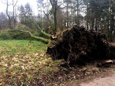 Nach einem Sturm umgefallener Baum