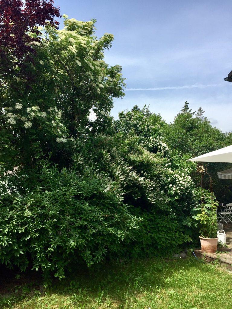 Gartentipps für Jasmin. Wer hat welche?