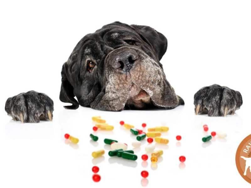 Minerals and Ash for Cats and Dogs