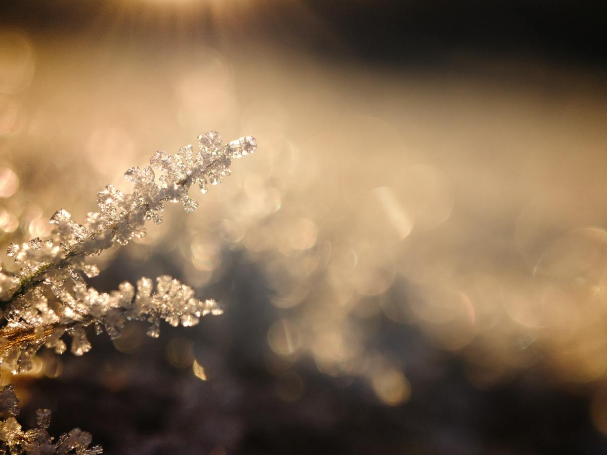 Close up of frost on a plant
