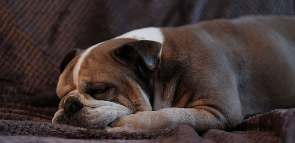 Sleeping dog is not a morning person