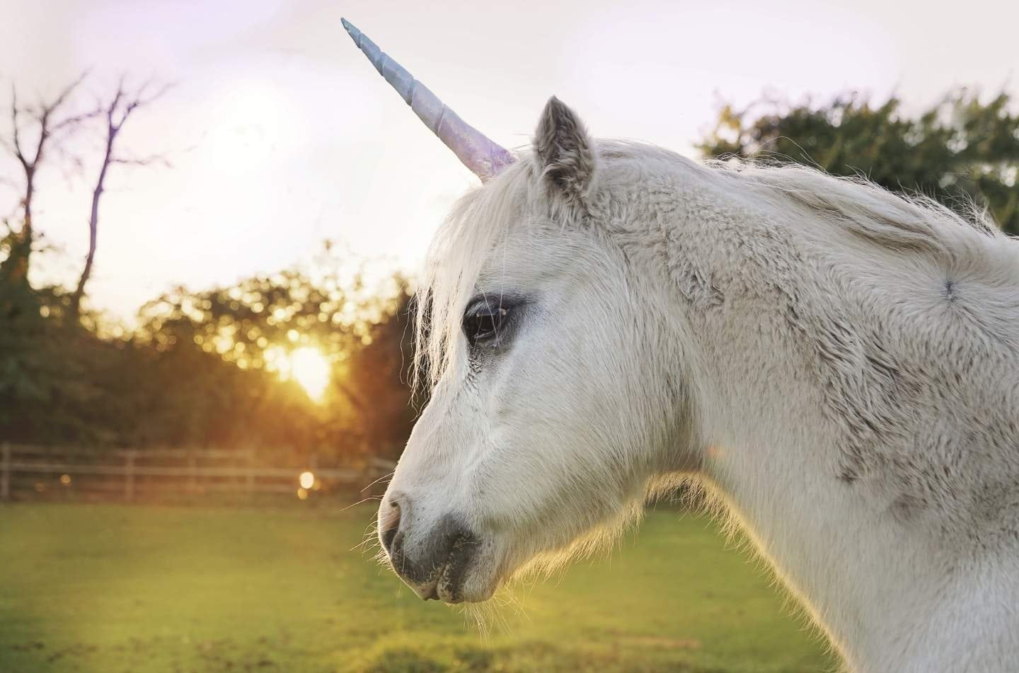 How To Build A Unicorn Email Program