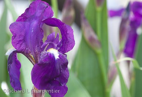 flowersinthedells-3