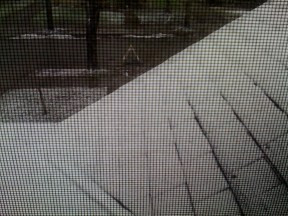 Looking out the front upstairs window on April 26