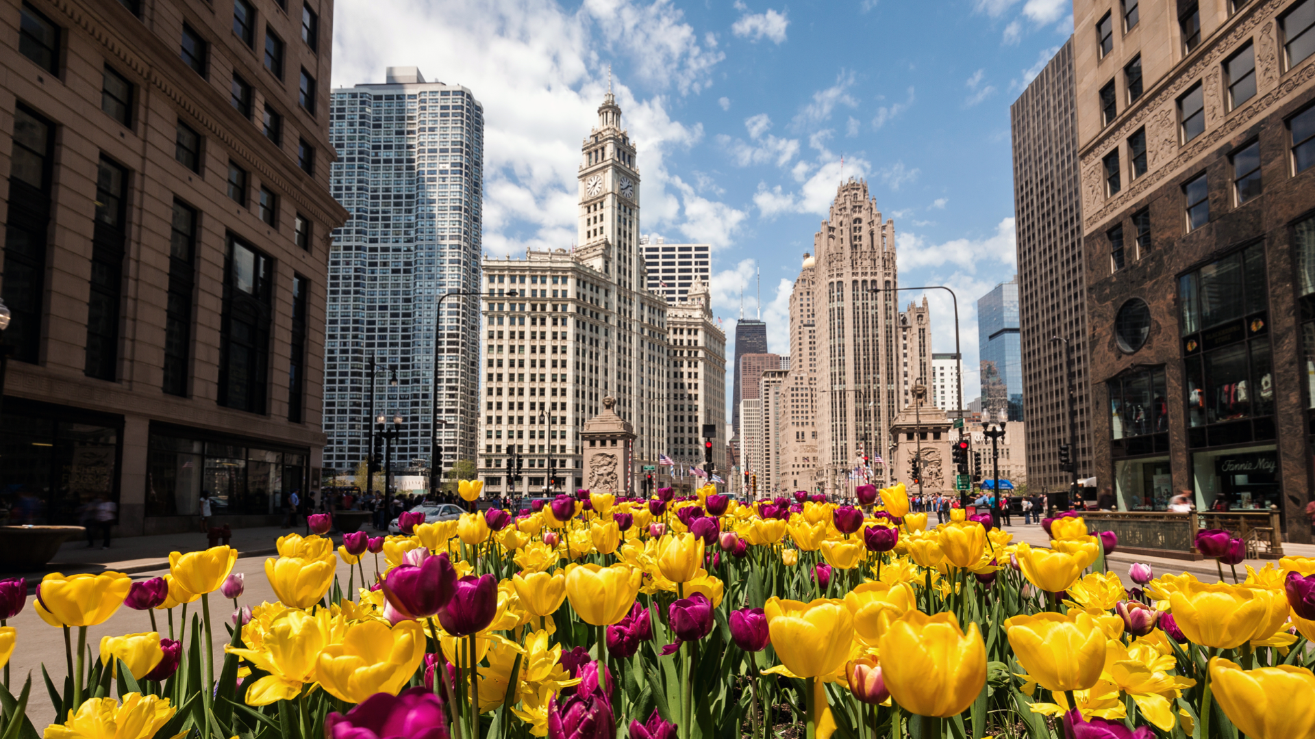 Chicago in Spring