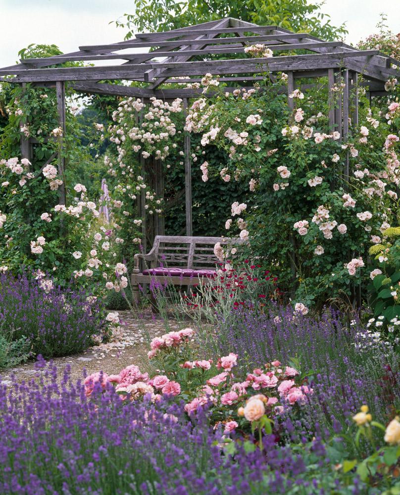 https blog roses guillot com rosiers grimpants