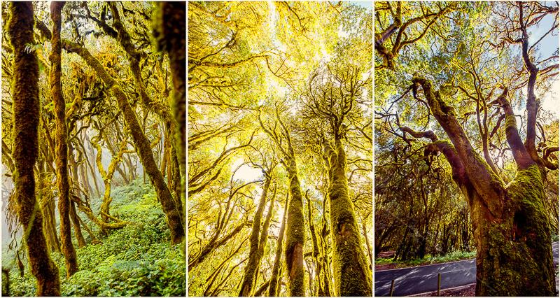 forest Garajonay-15