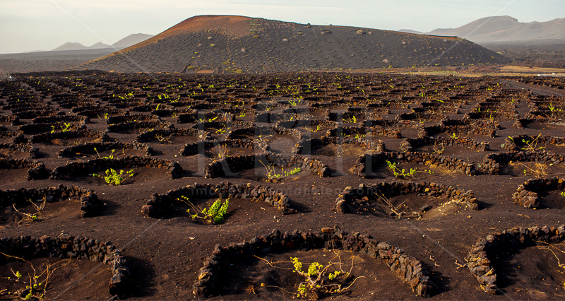 8 vineyards on Lanzarote, Canary Islands