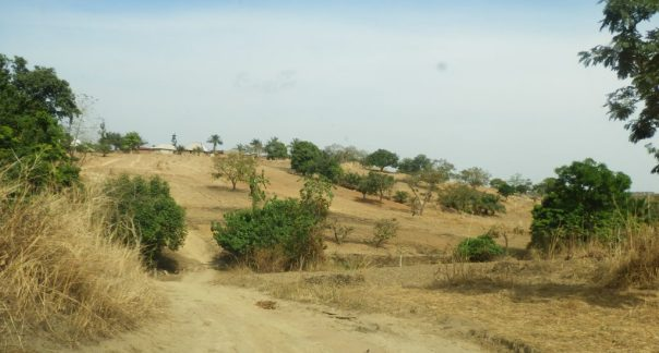 Bush in Duya land - countryside