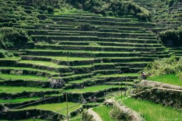 Rice terraces in Bontoc