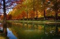 Naejangsan Autumn B-21