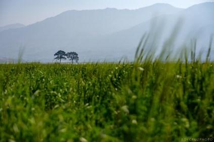 South Korea Travel Editorial Photographer Hadong Gurye Seoul-7