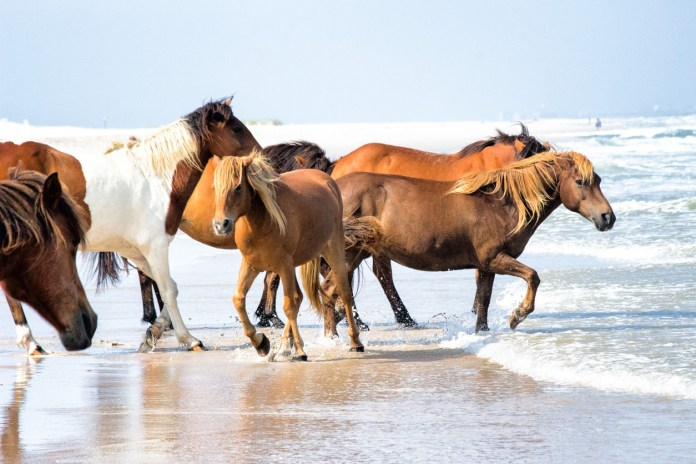 Assateague Island National Seashore, Maryland Romantic camping escapes