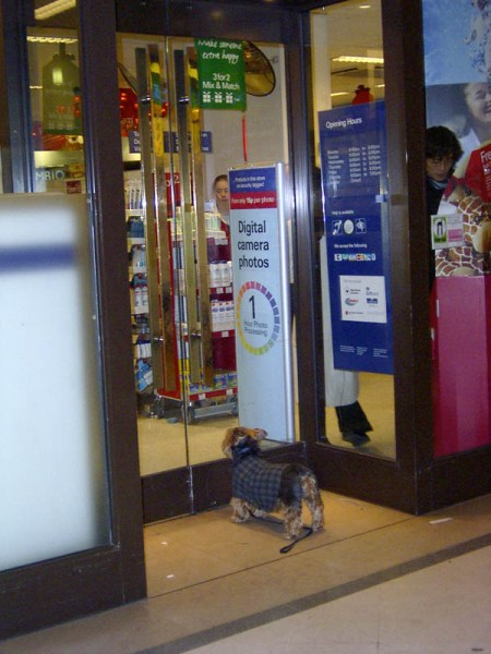 Anyone that's watched Snatch with me knows that I cannot help but laugh EVERYTIME the little dog in it squeeks… same deal here. Every time I see this photo I chuckle. It was the funniest thing – this was in a little shopping centre/mall type thing and this dog was standing outside the glass door of a drug store just waiting for the right person to come out, watching everything that went on inside. People would come out… he'd move, and then run right back and put his nose up to the door. Too funny. Too cute.
