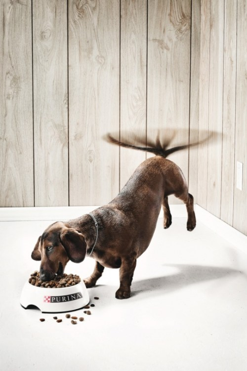 purina-dog-advertising-guerrilla