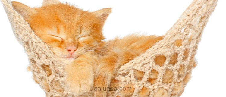 10 metodi per prendere sonno