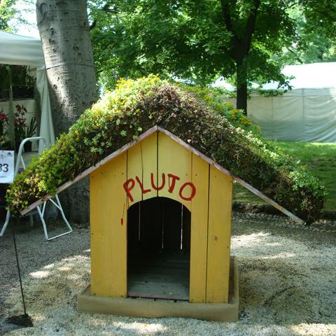 un tetto vegetale anche per Pluto! | ©foto Sandra Longinotti