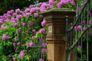 An old iron gate to a community surrounding by pink flowers