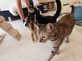 猫カフェ cat cafe nyanny 秋葉原店