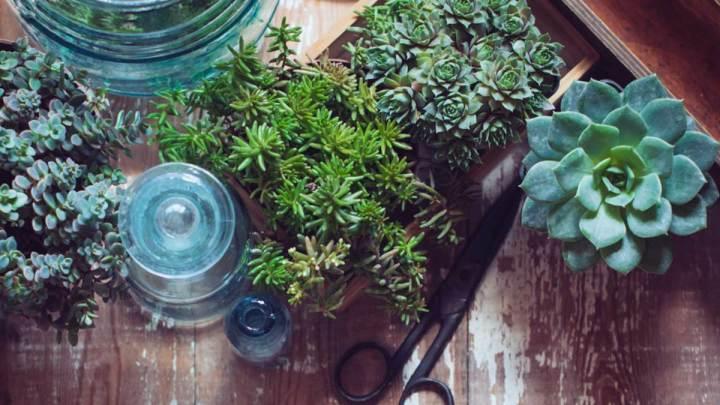 花藝課 | 關於多肉植物的有趣事實和冷知識,你知道多少?