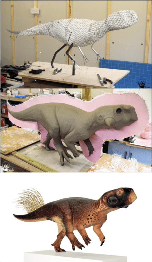 Different stages of model making of Psittacosaurus, including the final version. Images credit of Bob Nicholls, used with permission.