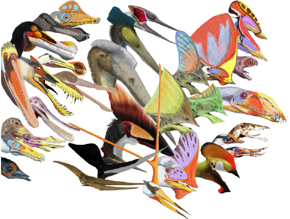 llustrations of 33 different pterosaur headcrests, showing the diversity of this group of reptiles.