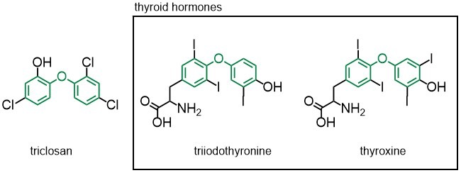 chemical structure of triclosan and two thyroid hormones