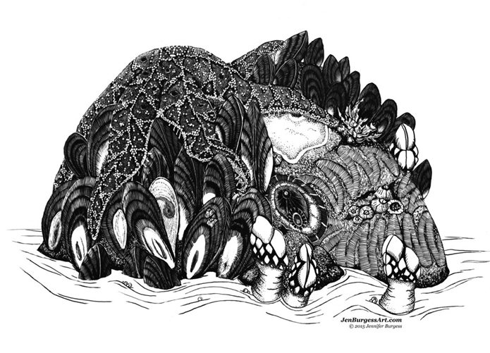 IntertidalInvertebrates_Jen Burgess