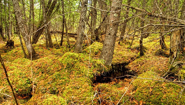 Black-Spruce-Bog_Whitemouth-River-watershed_Manitoba-by-Harvey-Sawatzky