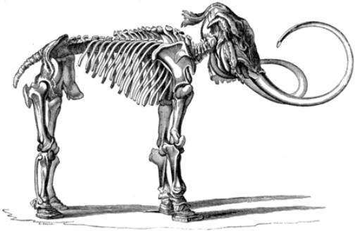 mammoth-skeleton_Wilhelm-Tilesius