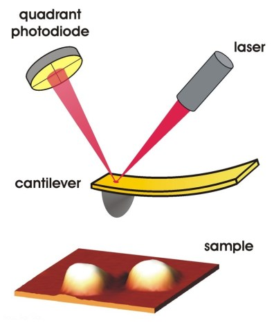 AFM setup. (Source)