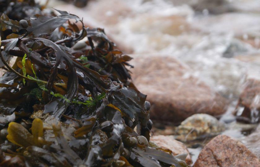 algas-cocina-scoolinary