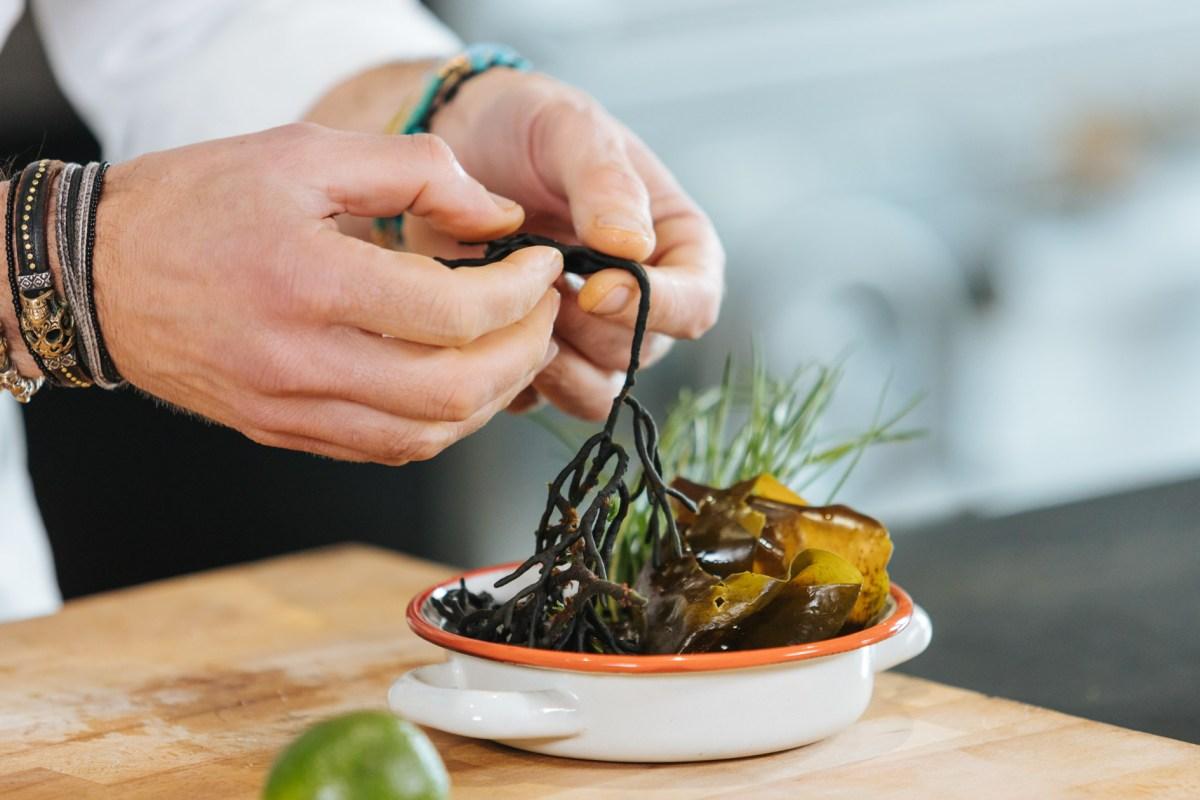 ¿Cuáles son las algas y halófilas más utilizadas en cocina?