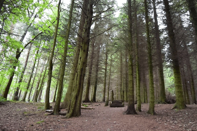 Glentress Forest (Credit and copyright:  Linsay Elgin)