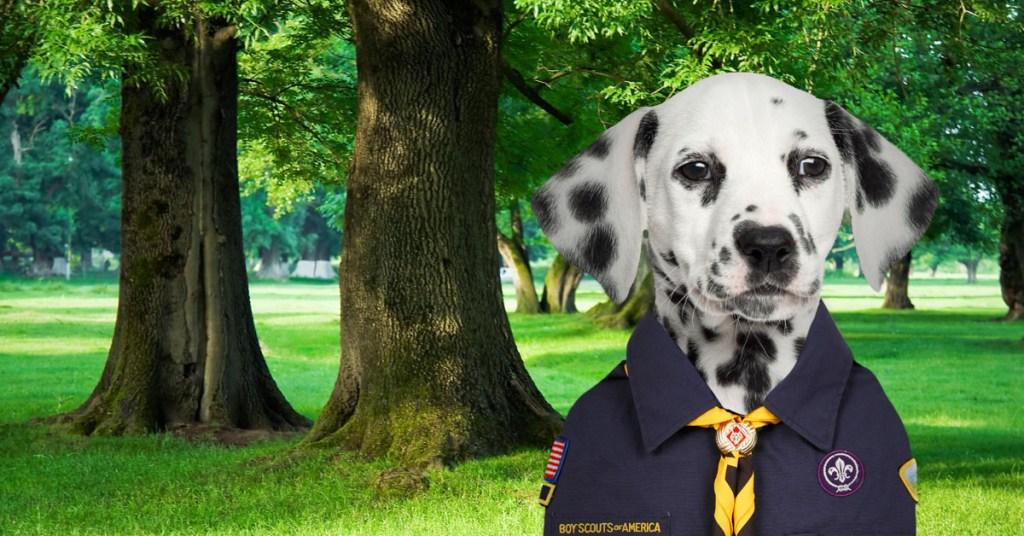 PuppyScout1