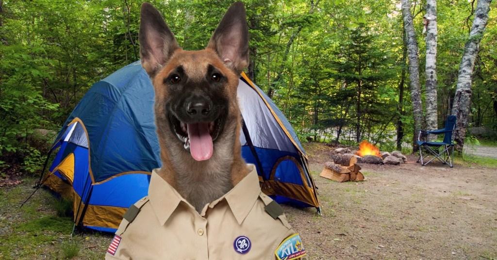 PuppyScout3