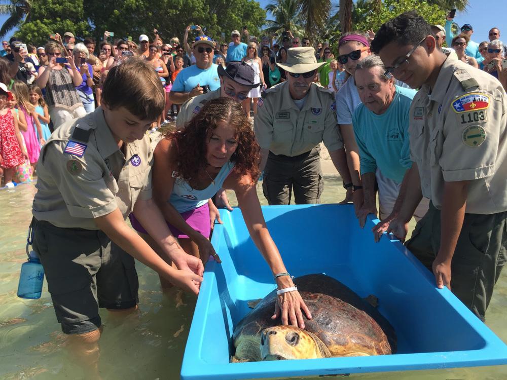 Bubbles the sea turtle 3