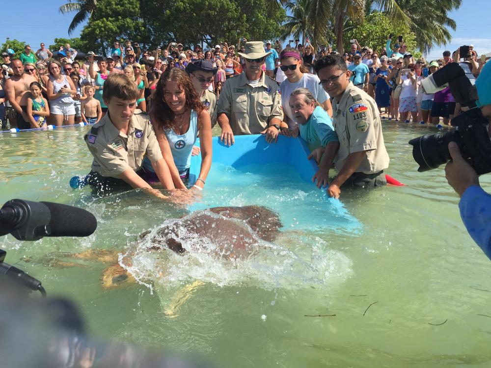 Bubbles the sea turtle 4