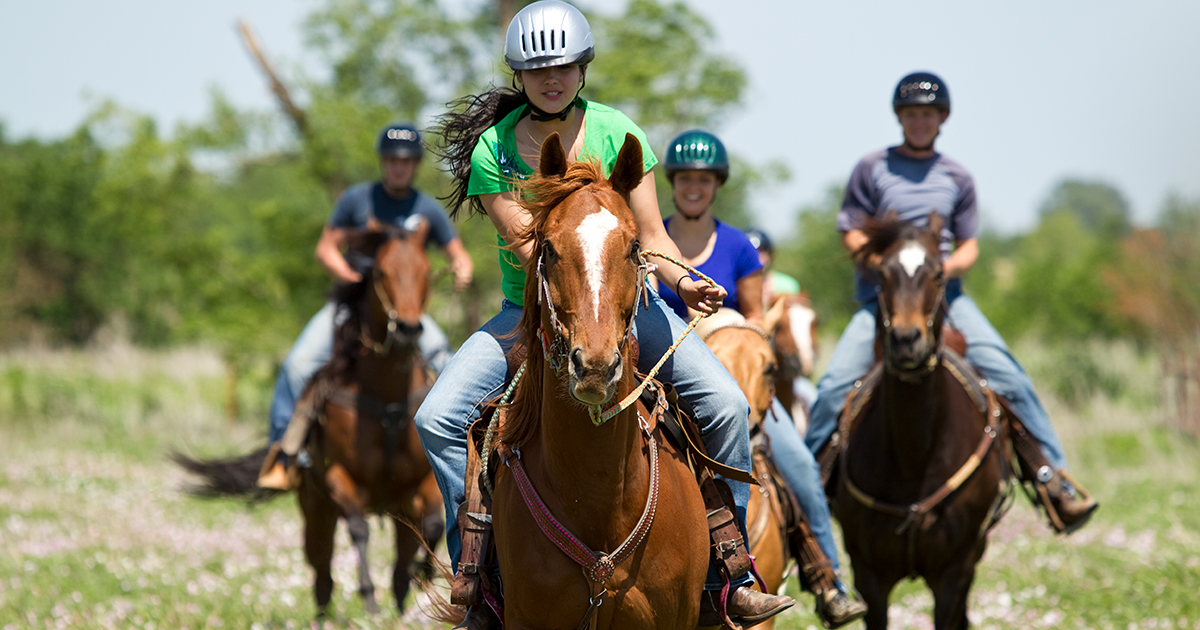 It's good horse sense to review guidelines before yelling 'Giddy-up!'