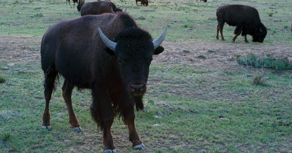 Invite one of Philmont's animals to your next video teleconference